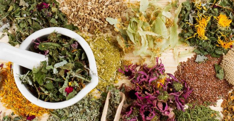 Целебные растения от различных недугов